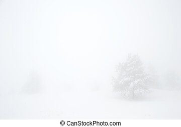 Winter Scenics - Snow covered tree on Ay Petri mountain in...