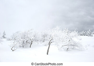 Snow covered tree on Ay Petri mountain. Ukraine
