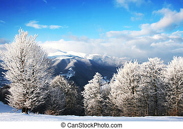 Winter Scenics - winter landscape with a clouds and a...