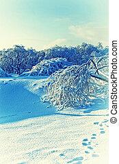 winter, schneelandschaft, flaumig, schöne