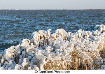Winter sea landscape with reed covered in ice, The Netherlands
