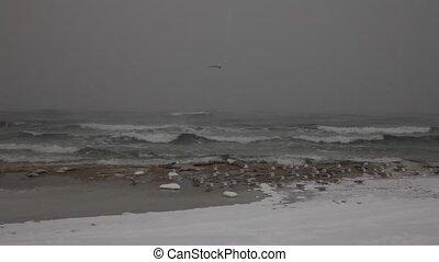 Winter sea scene with seagulls