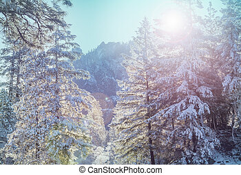 Winter season - Snow covered trees in the winter forest
