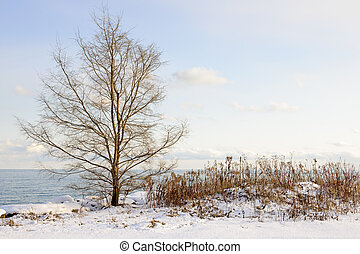 Snowy winter shore of lake Ontario in Sylvan park Toronto