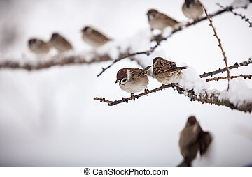 Winter shot of sparrows sitting on branch at snowy day