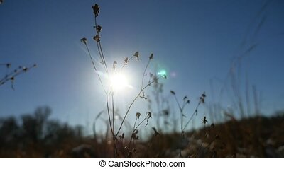 winter, silhouette, droog, gras, in, de, t?µ?a? ???????, landscape, sneeuw, natuur