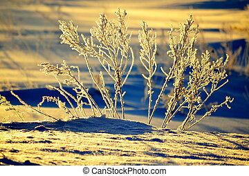 The slanting rays of the sun illuminated the morning winter grass