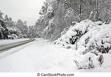 Winter snow and a road going through forest - Cold winter ...