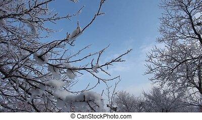 winter - snow background