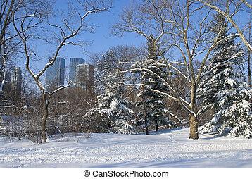 Winter Snow Central Park