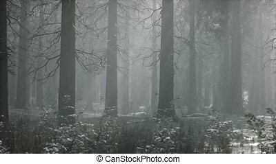 winter snow-covered forest on a cloudy day