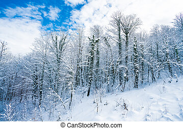 Winter snow covered trees in the mountains