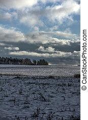 Winter. Snow. Field.