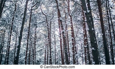 Winter snow forest with red sunny lights in the trees X-mass...