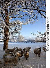 Winter snow on a farm - Yorkshire - England
