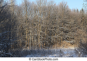 Winter snow park forest