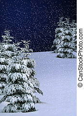 Winter Snow - pine trees covered with falling snow