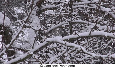 winter snow snowflake falling and tree branch background