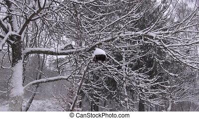 winter snow snowing in farm garden