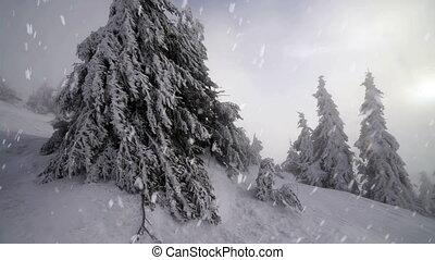 Winter snow storm blizzard, fir trees full of snow, ice...