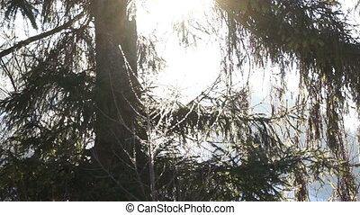 Winter snow sun tree