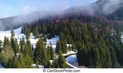 Winter snow trees. aerial view fly over. nature