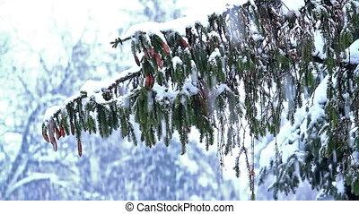 Winter snowfall