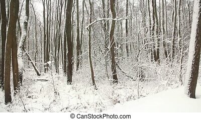 winter snowfall in a white forest - winter blizzard,...