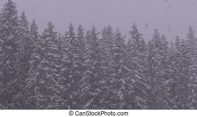 Winter Snowfall in the Mountain Pine Forest with Snowy Christmas Trees. Slow Motion.