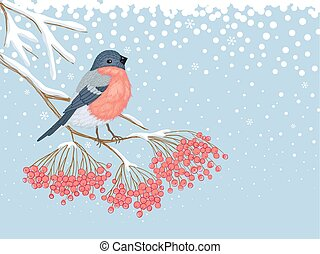 Winter snowy card with bullfinch on the branch of rowan