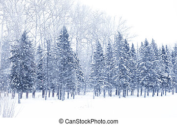 Winter snowy day in a beautiful forest - Winter snowy day in...