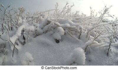 Winter snowy field. christmas