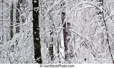 Winter snowy forest trees