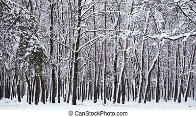 Winter. Snowy forest