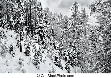 Winter Snowy Landscape, Mountains and Trees