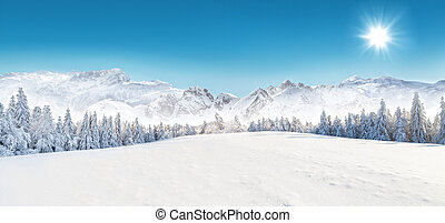 Winter snowy landscape - Winter snowy forest with alpen...