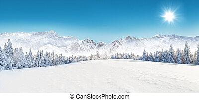 Winter snowy landscape - Winter snowy forest with alpen ...
