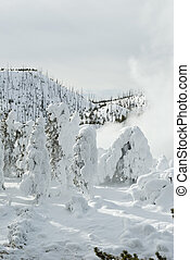 Winter, Snowy Landscape, Yellowstone NP
