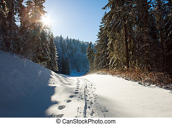 Winter snowy trail in pine forest on sunset background