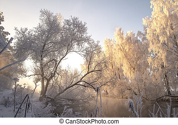 Winter. Snowy trees with hoarfrost on branches on river bank in morning sunlight. Christmas background. Frosty natural scene. Winter landscape
