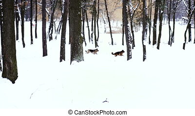 Winter. Spectacles in the snowy woods