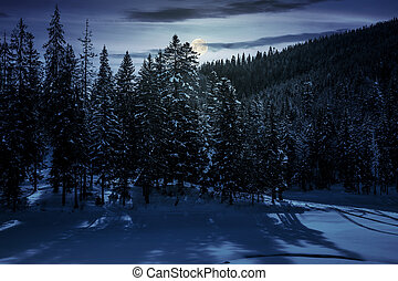winter spruce forest at night