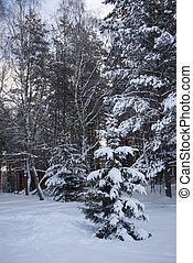 winter spruce frorest landsacpe