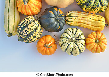 Winter squash collection