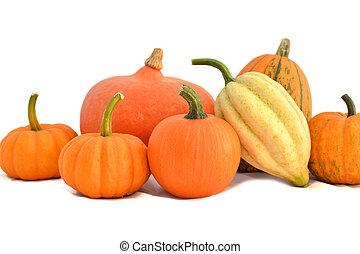 Winter squashes and mini pumpkins