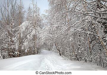 winter, steegje
