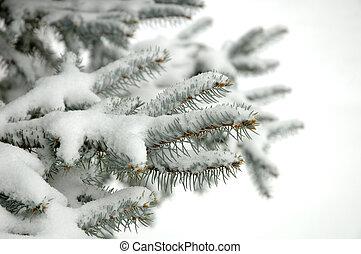 Winter - Fir brunch under snow