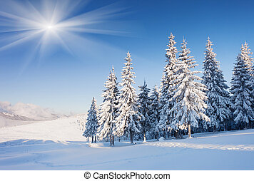 winter - A frosty and sunny day is in mountains