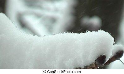 winter,