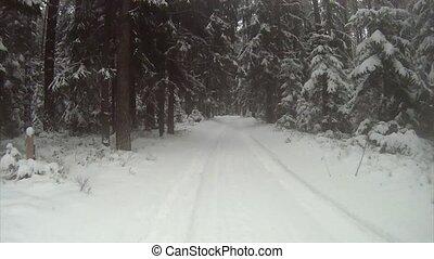 winter, straße, in, der, wälder